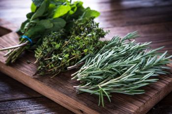 Cut herbs to store for winter