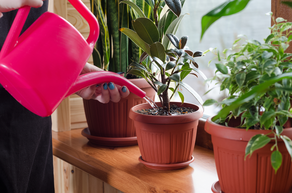 Looking for houseplants near Newchurch?