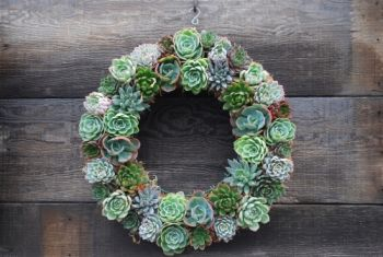 DIY Ideas: Make your own succulent wreath