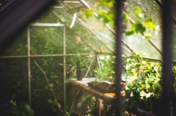 How to clean up your greenhouse?