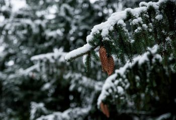 Protect plants, shrubs and trees against the frost