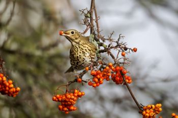 Tips on feeding garden birds in winter