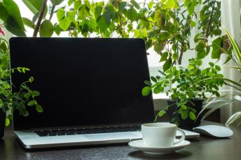 Top 5 plants for the home office
