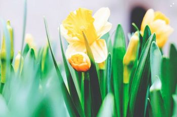 Top 5 Spring bulbs to order now