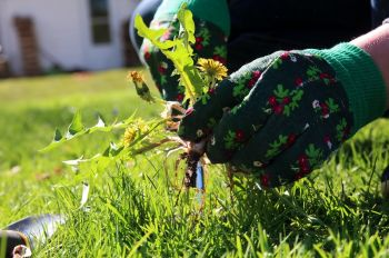 What to do about garden weeds