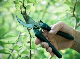Must-have gardening tools